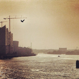 Like a Bird Hamburg Elbe