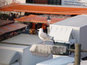 Moewe 2 Fischmarkt