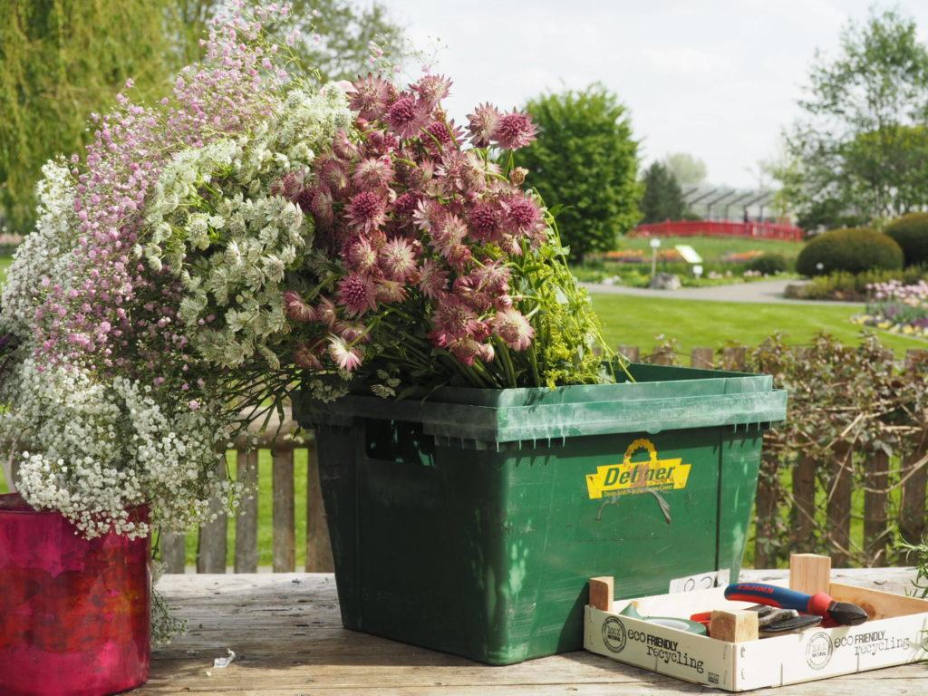 Ein Besuch im Blumenparadies bei Dehner *Werbung* ~ Elbgestoeber Bilder